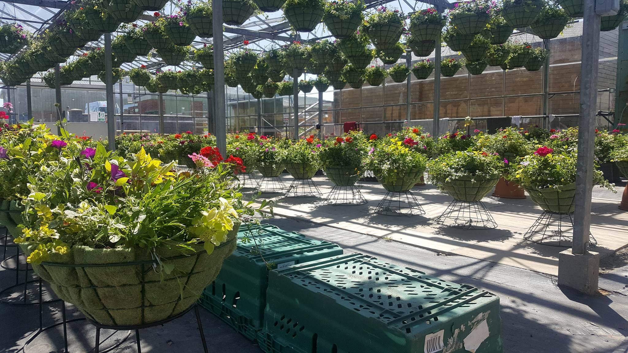 Hanging Baskets and Bedding Plants