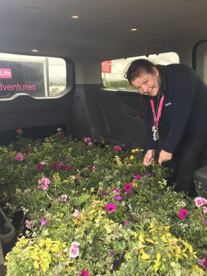 Our hanging baskets bring joy to the local community